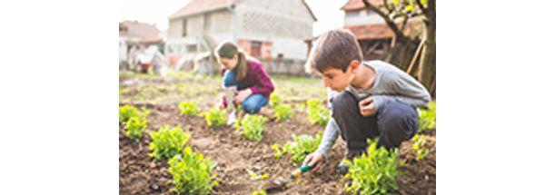 fertilidade-do-solo-e-nutricao-mineral-de-plantas-pequena