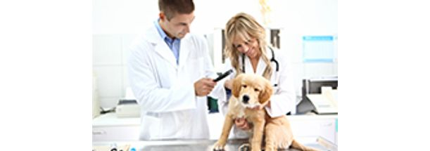 clinica-medica-e-cirurgica-de-pequenos-animais-pequena